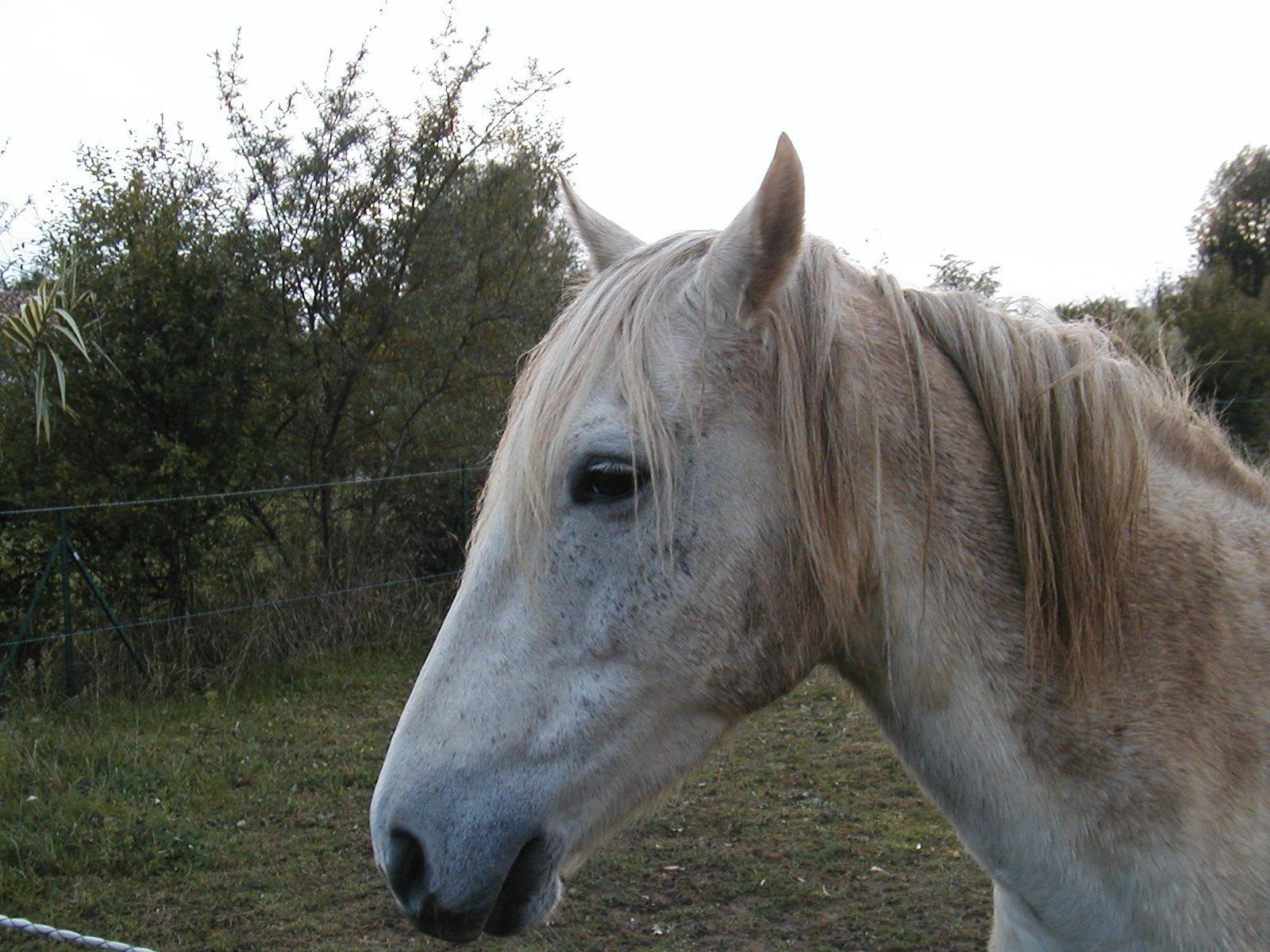 cheval97.jpg
