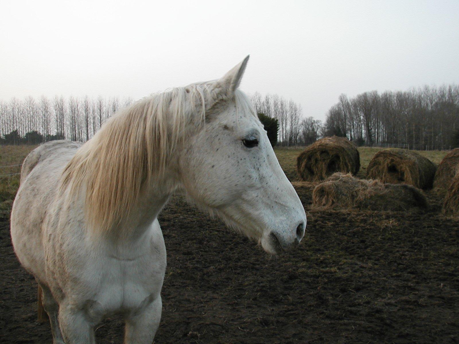chevalblanc82.jpg