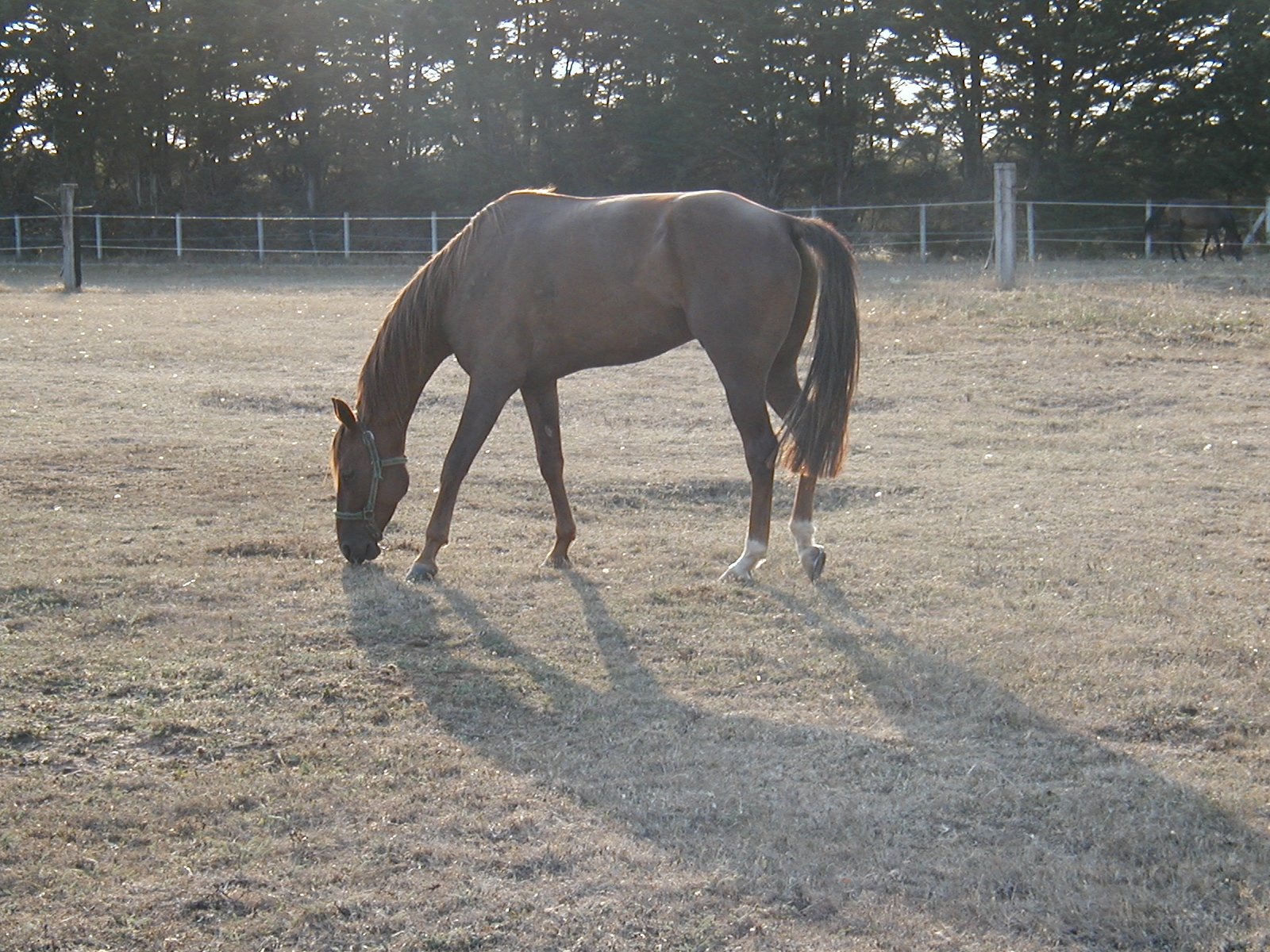cheval29.jpg